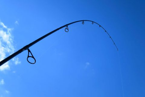 魚釣り入門!釣りの種類と釣れる魚種について!!
