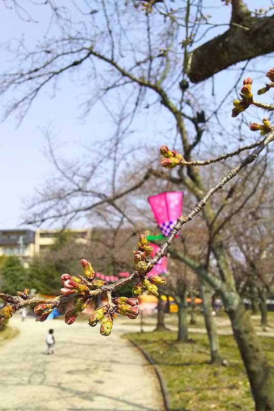 桜には少しだけ早かった