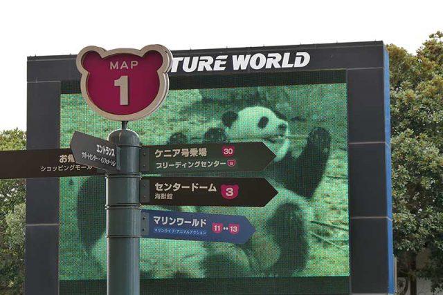 パンダの映像が!!