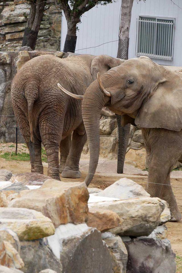 大きな象を発見!!