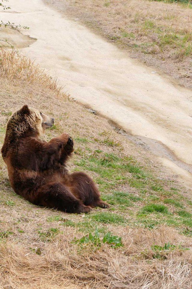 大きな熊を発見!!