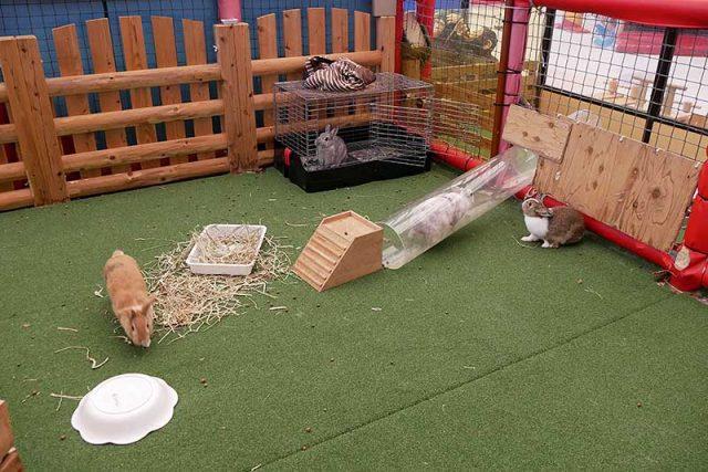 ウサギが居ました!!
