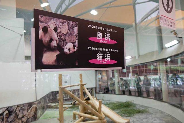 パンダの紹介