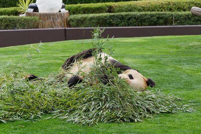 屋外にもパンダが居ます