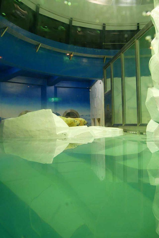センタードーム海獣館