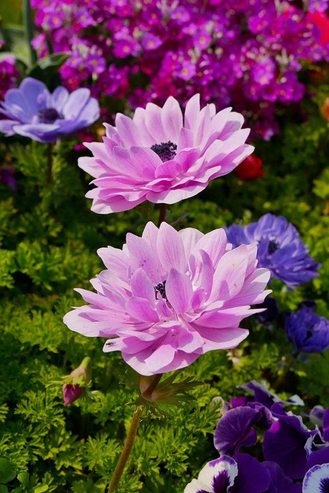 綺麗なお花!!