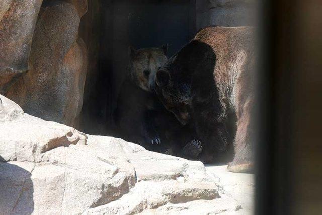 熊を発見!!