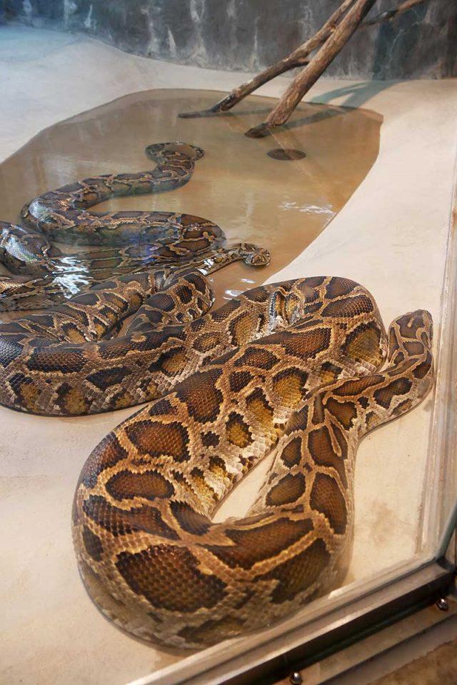 蛇を発見!!