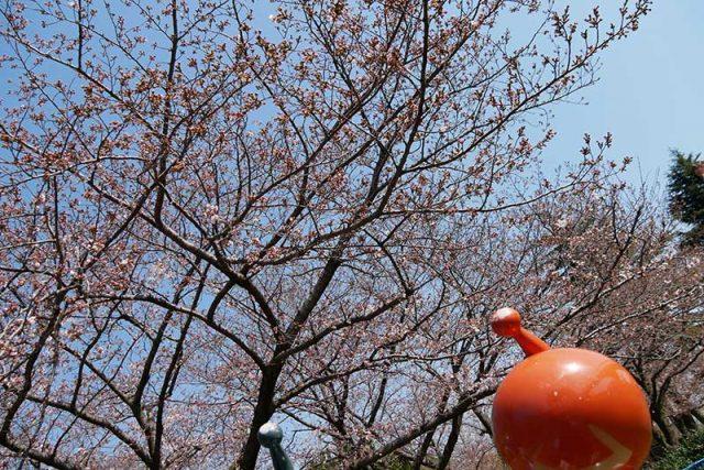 桜が咲いていれば綺麗なのに…