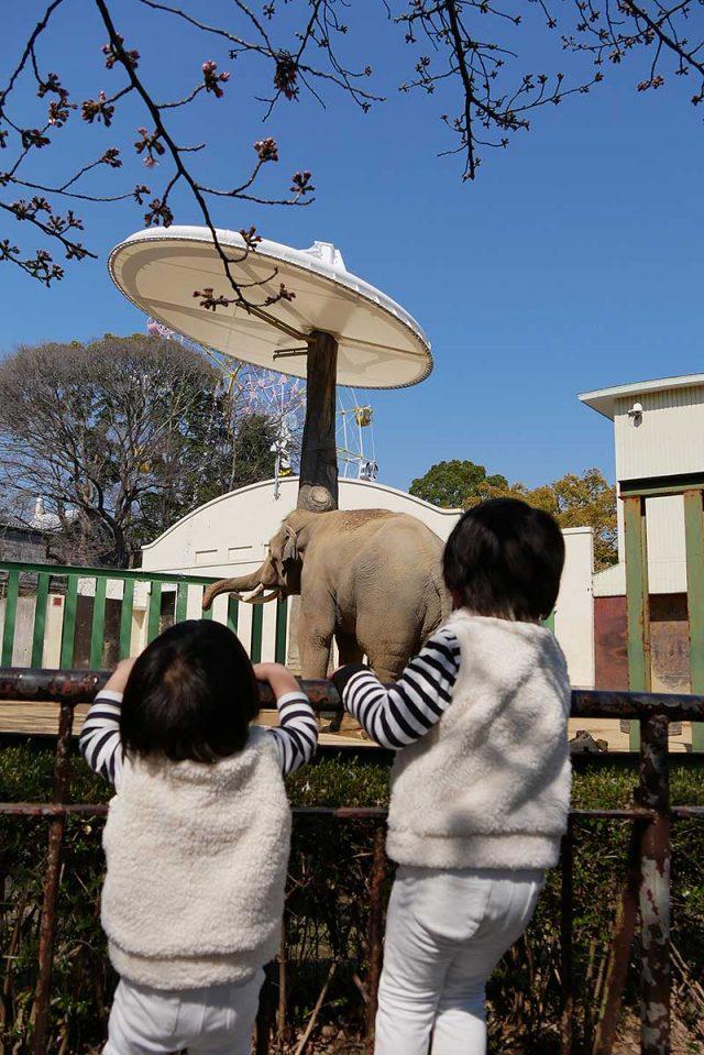 象に夢中です
