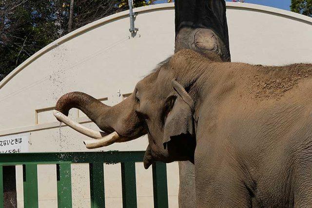大きな象さん!!