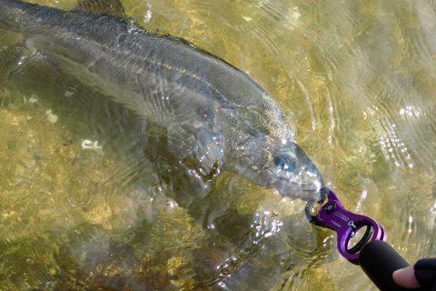 シーバスを釣るための要素と釣果を伸ばすコツ!!