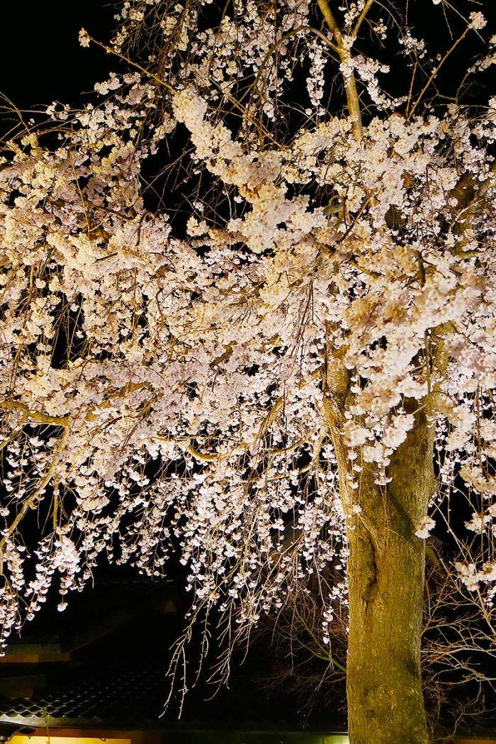 夜桜も素敵ですね