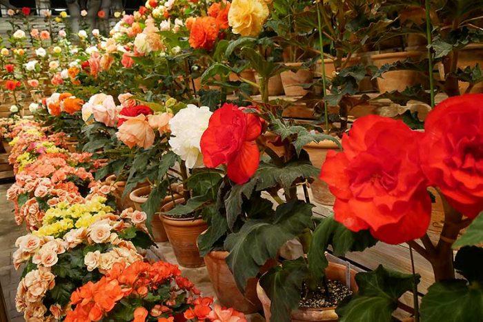 ズラリと並ぶ綺麗な花
