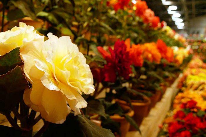 花が綺麗です