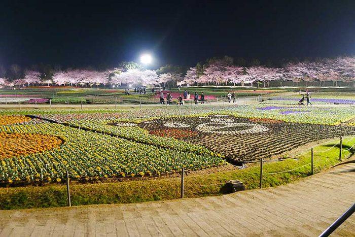 くまモンの花畑