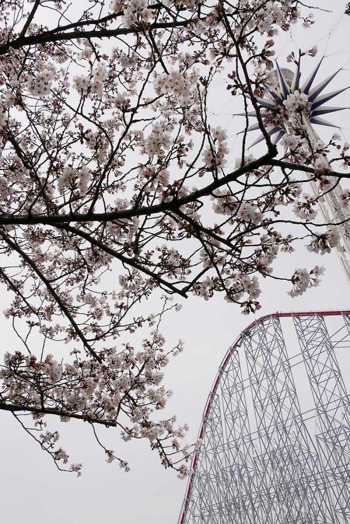 桜が綺麗ですね!!
