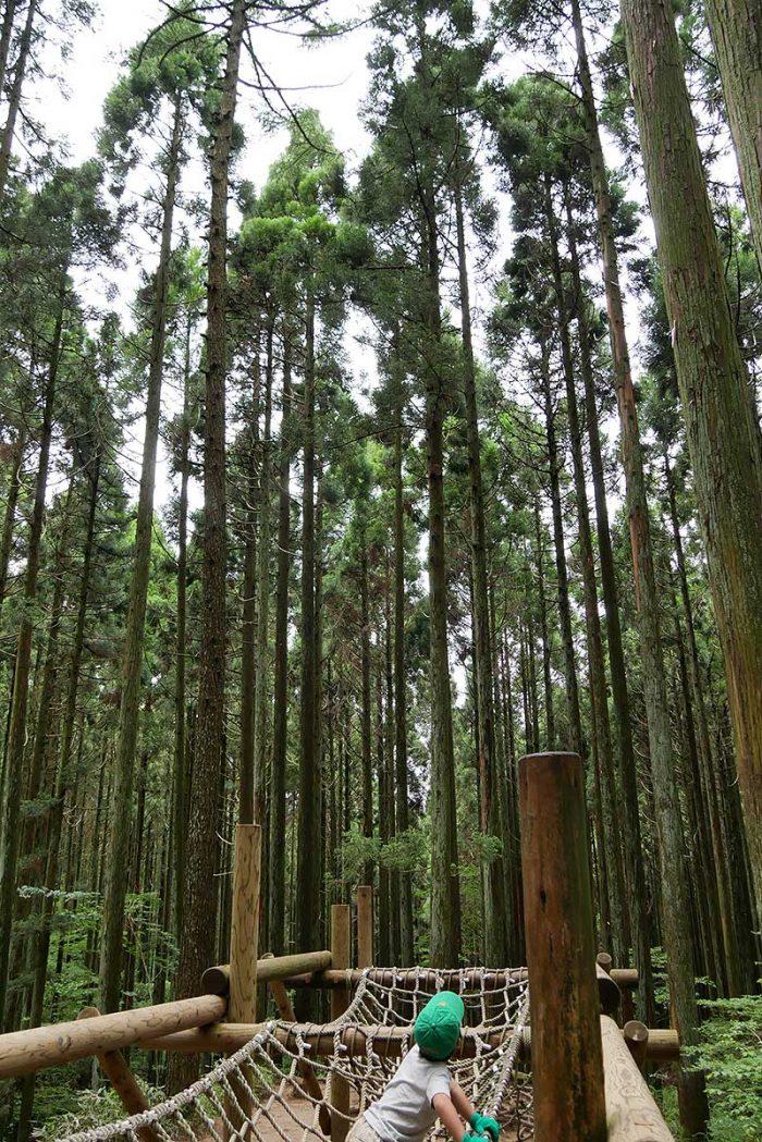 木々が凄い