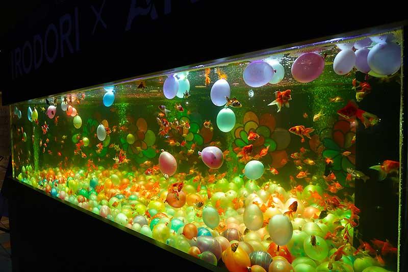 水槽展示「彩り金魚」