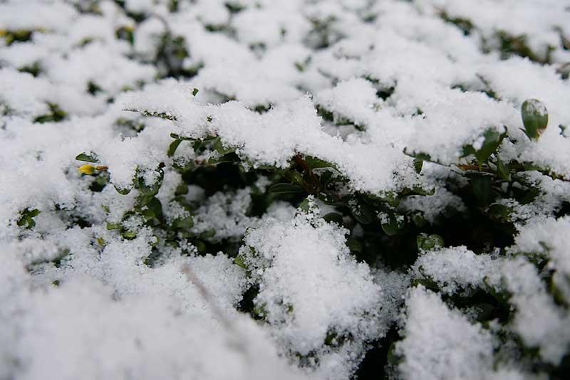 木に積もった雪