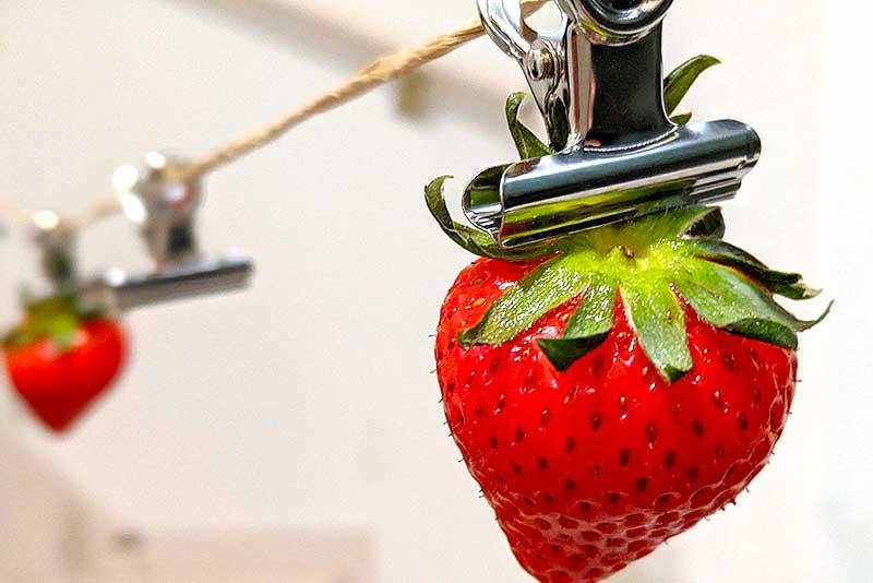 クリップに苺のヘタを挟む