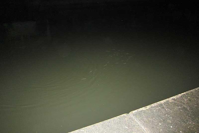 河川のベイト