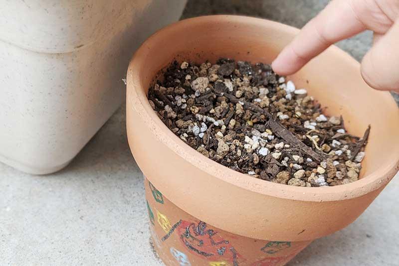 指で穴を掘って種植え