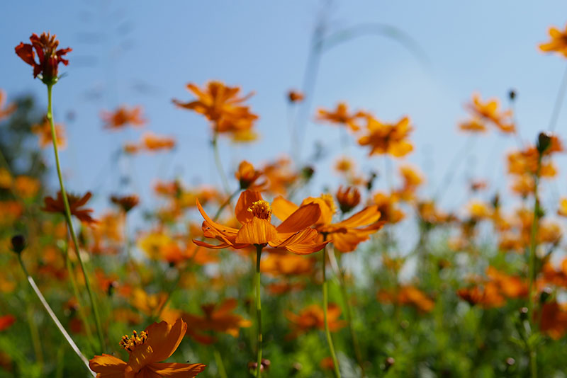 綺麗なオレンジの花