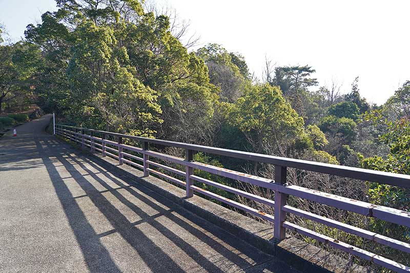 橋の上から眺める木々の風景