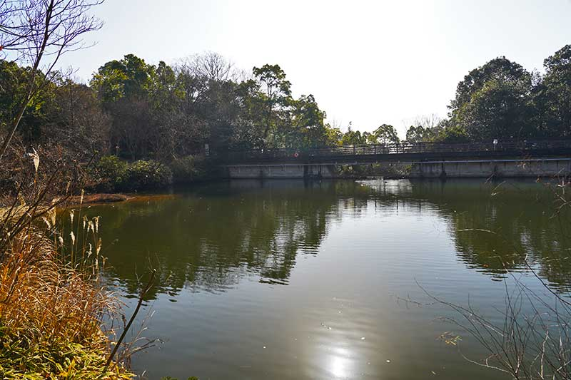 太陽が反射するみくるま池