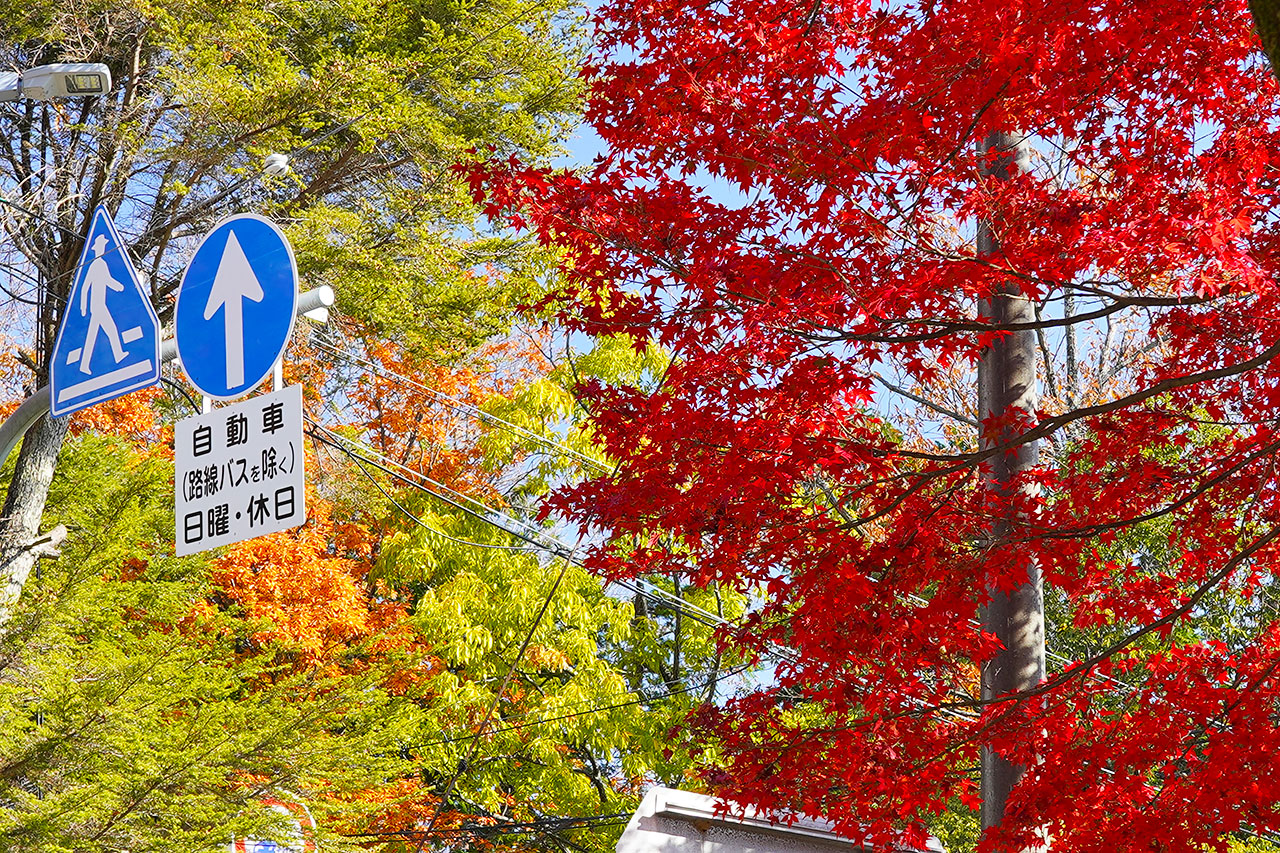 【写真展示】神呪寺・廣田神社周辺の紅葉 / 2020年12月