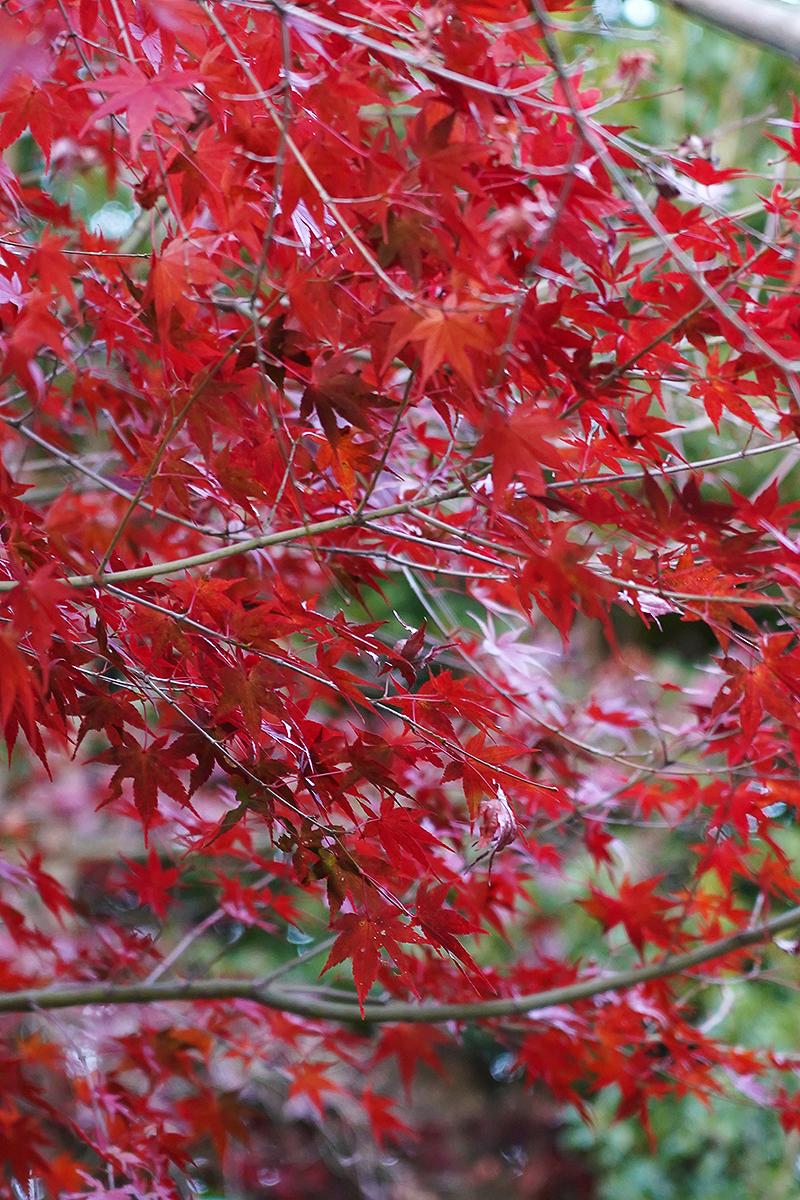 シンボルゾーンの紅葉