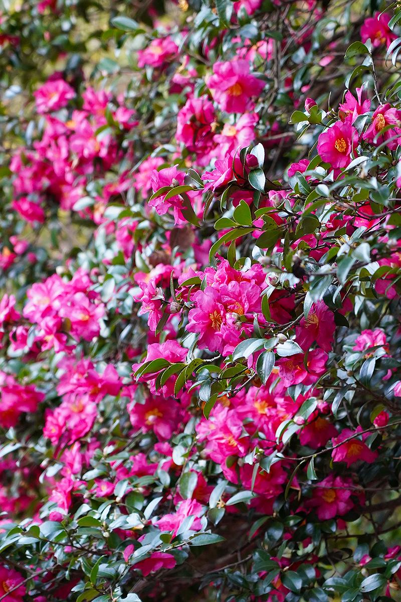 シンボルゾーンの花