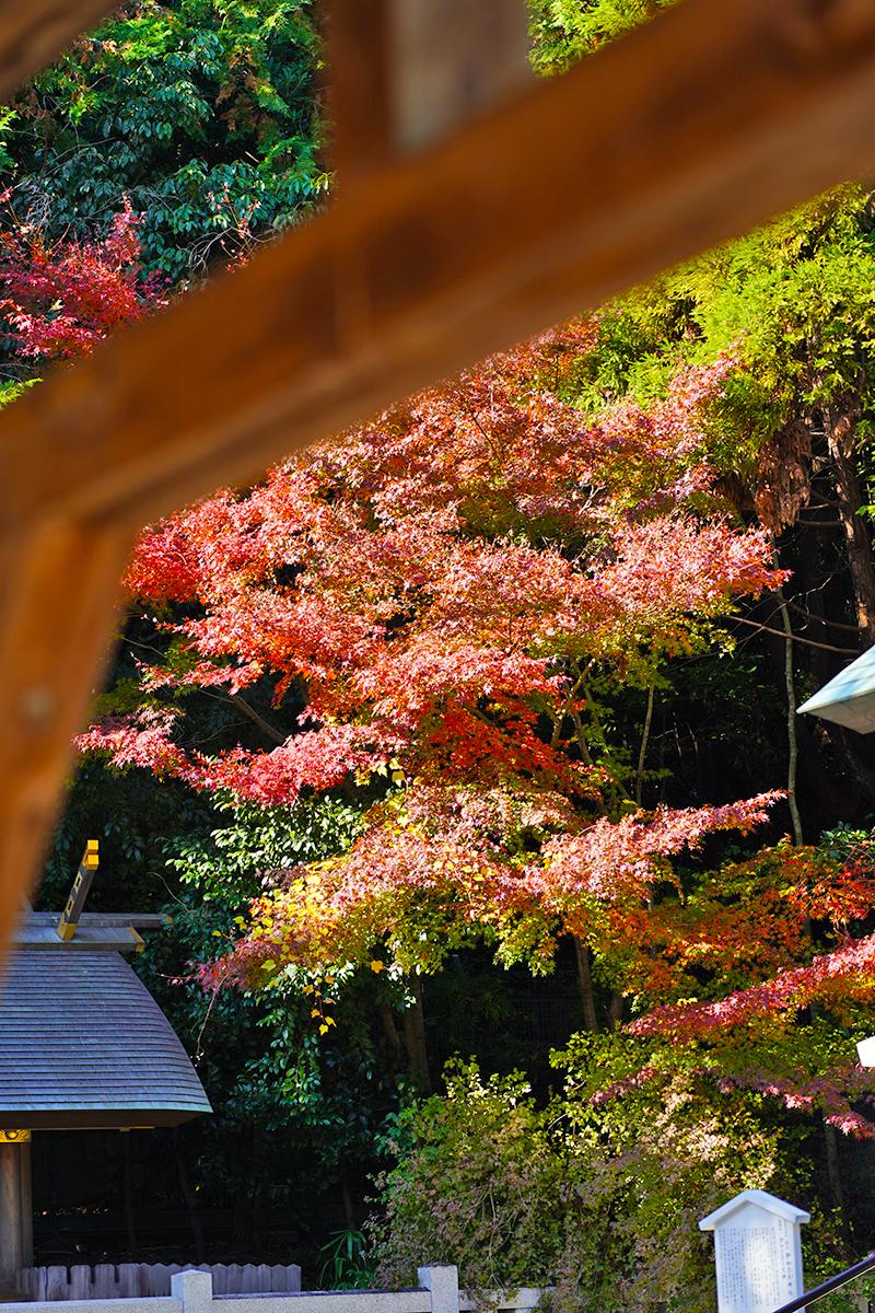 廣田神社横の紅葉