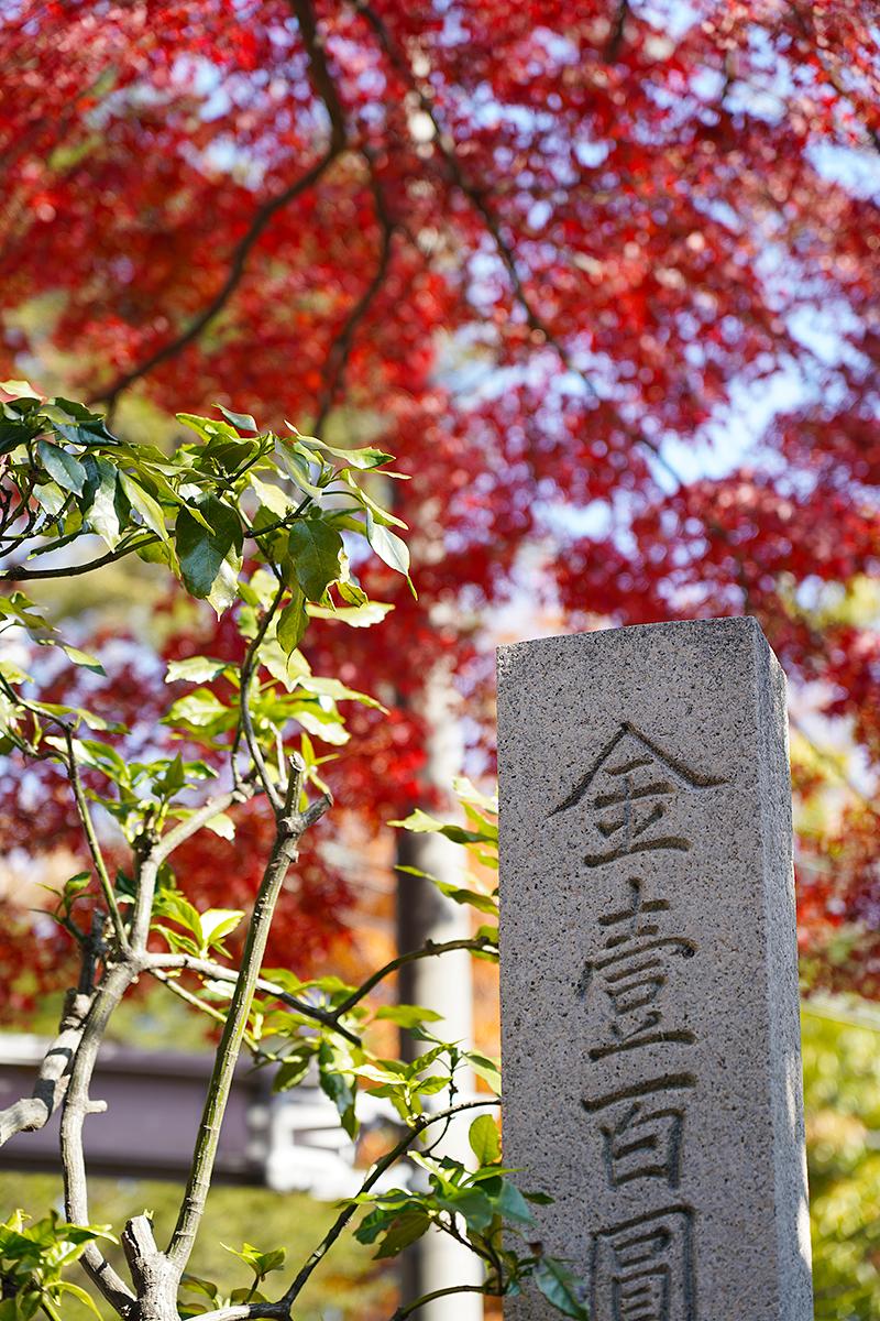 神呪寺前の紅葉