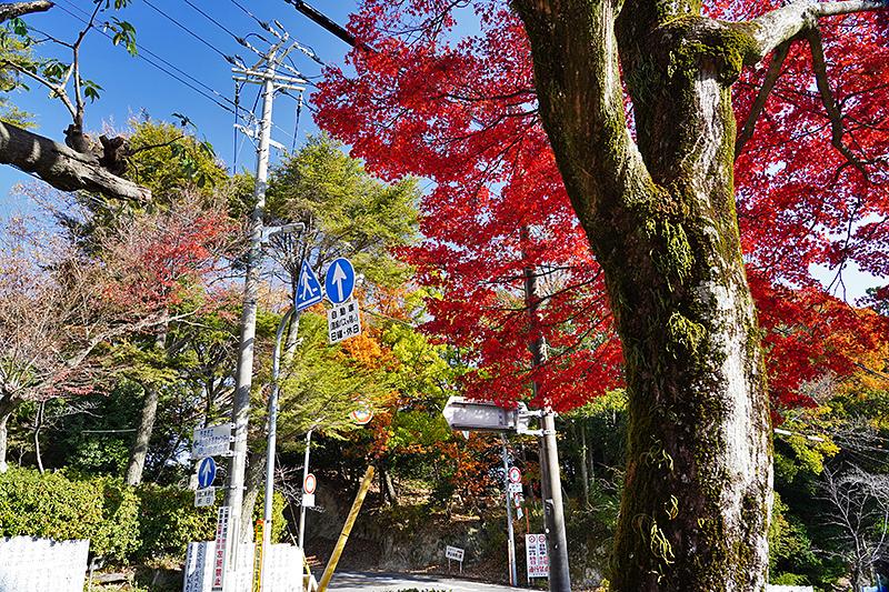 真っ赤なモミジの紅葉とピクニックロードの交差点
