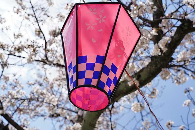 ピンクの提灯と桜の木