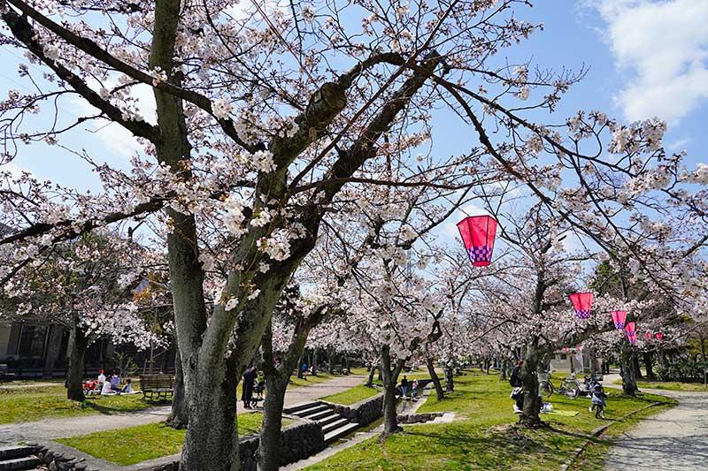 水路と桜並木