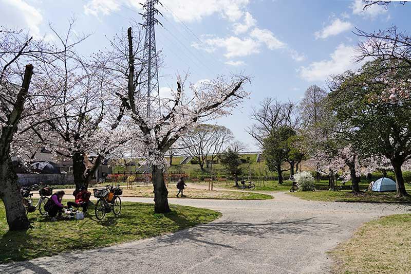西武庫公園・桜の木