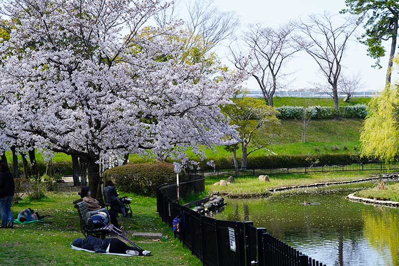 西武庫公園・菖蒲(しょうぶ)池