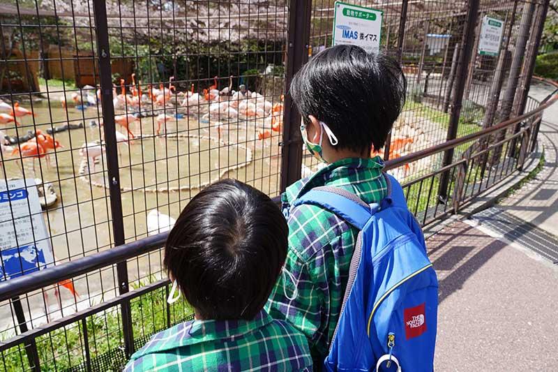 フラミンゴを眺める子供達