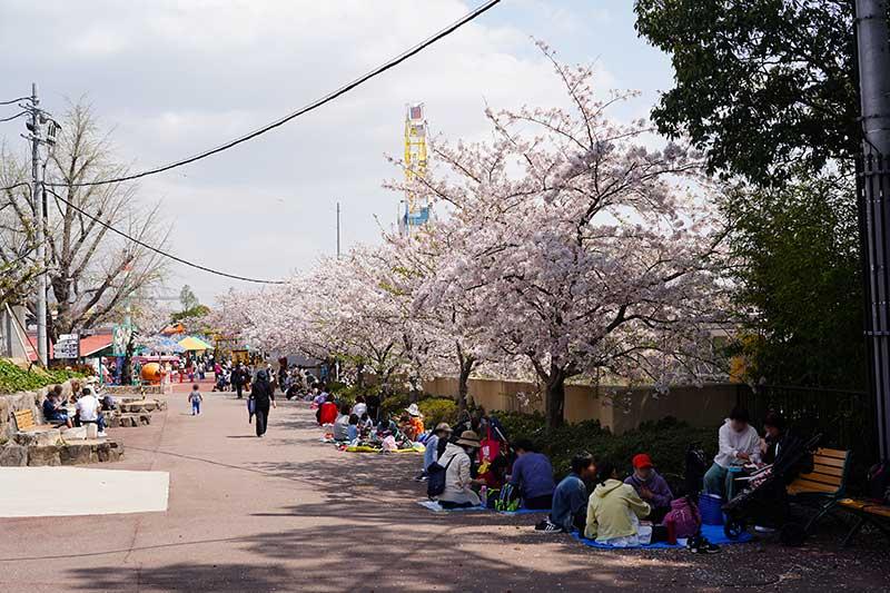 桜が綺麗な通路と花見客
