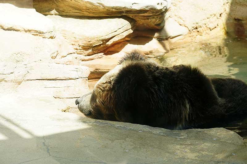 ぐったりするクマ