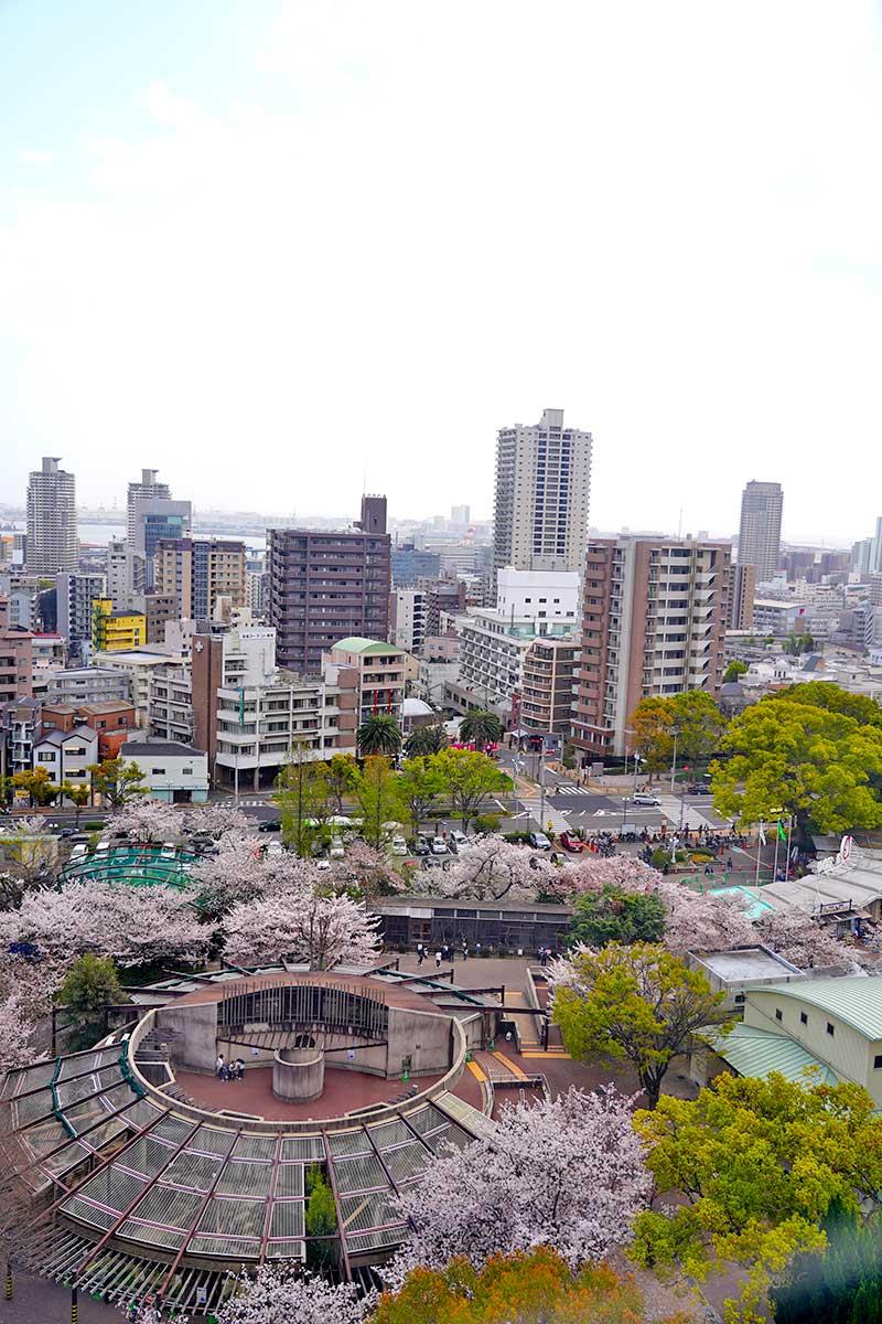 神戸方面と王子動物園を上空から眺める