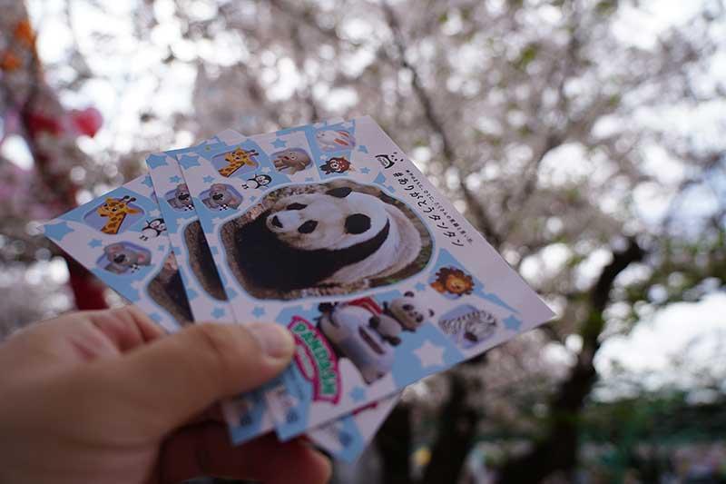 パンダのポストカード