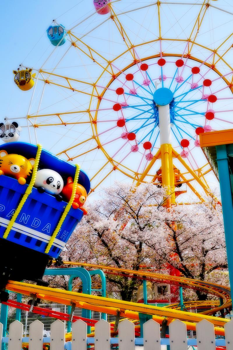 王子動物園・遊園地エリアの桜