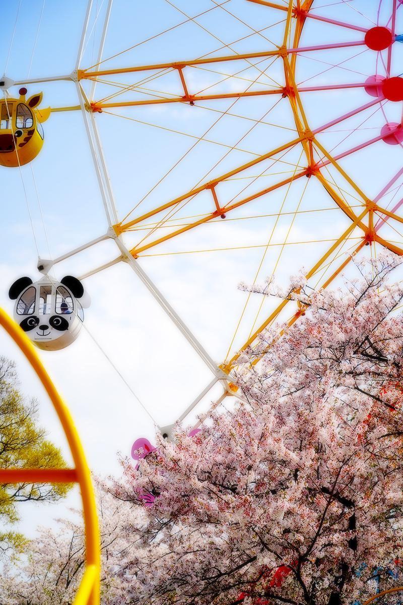 王子動物園・桜と観覧車