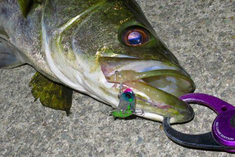 【シーバス釣り】フックチューンの実施例と釣果